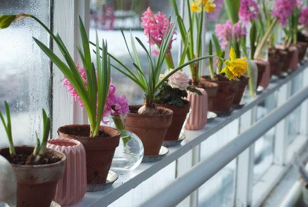 Green Home: 10 Plants you should definitely have at your place