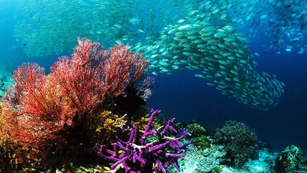 9 Places in India to go Scuba Diving