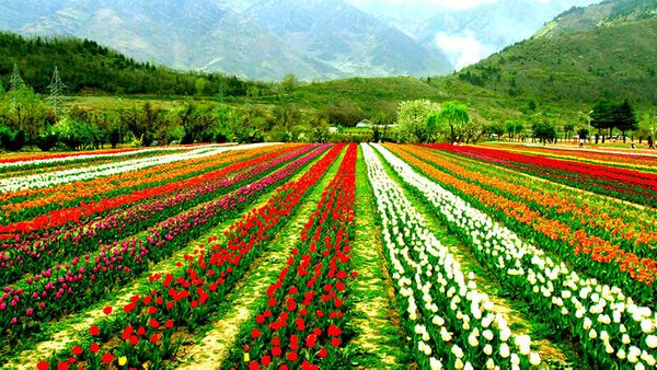 Witness Nature At Its Best In The Valleys Of Kashmir