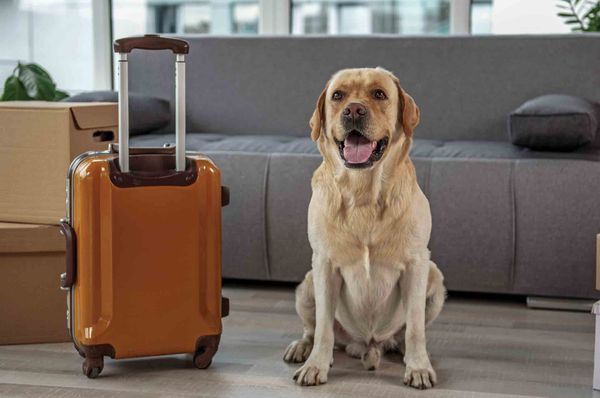 How to Travel in India with your Faithful Pets?