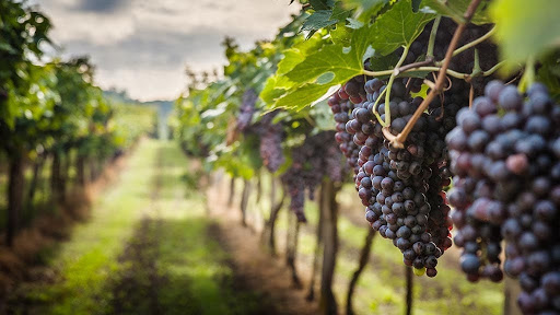 Must stroll through these Wineries for Wine lovers